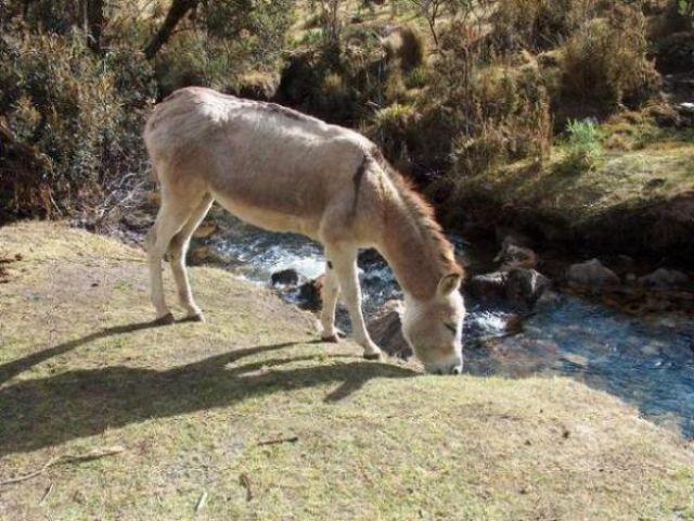 Zdj�cia: Dolina Vaqueria, Cordillera Blanca, Odpoczynek przy pierwszym obozie, PERU