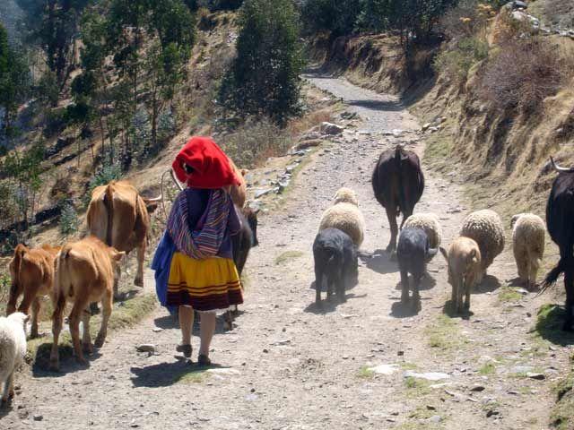 Zdjęcia: Okolice Huaraz, W drodze do wioski Pitec, PERU