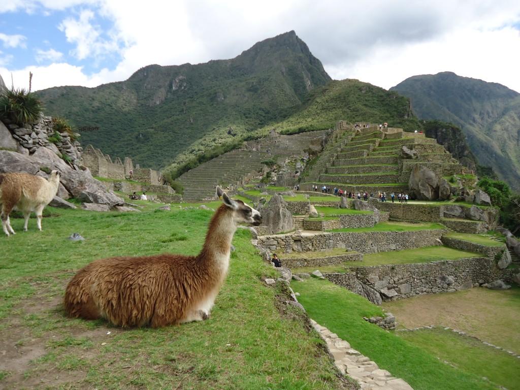 Zdjęcia: Machu Piccchu, Cuzco, Lamy, PERU