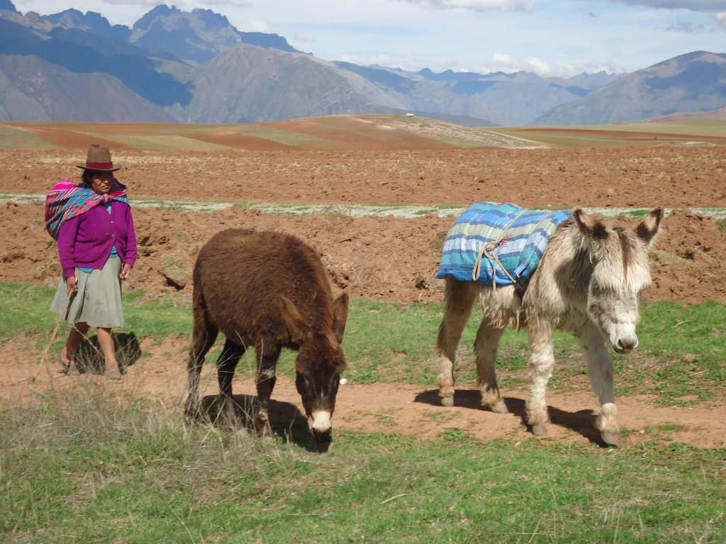 Zdjęcia: Moray, Cuzco, Pani z osiołkami, PERU