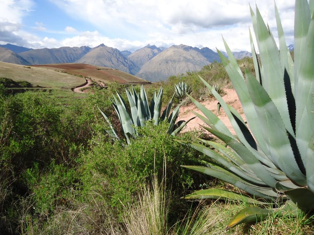 Zdjęcia: Moray, Cuzco, Panorama z agawami, PERU