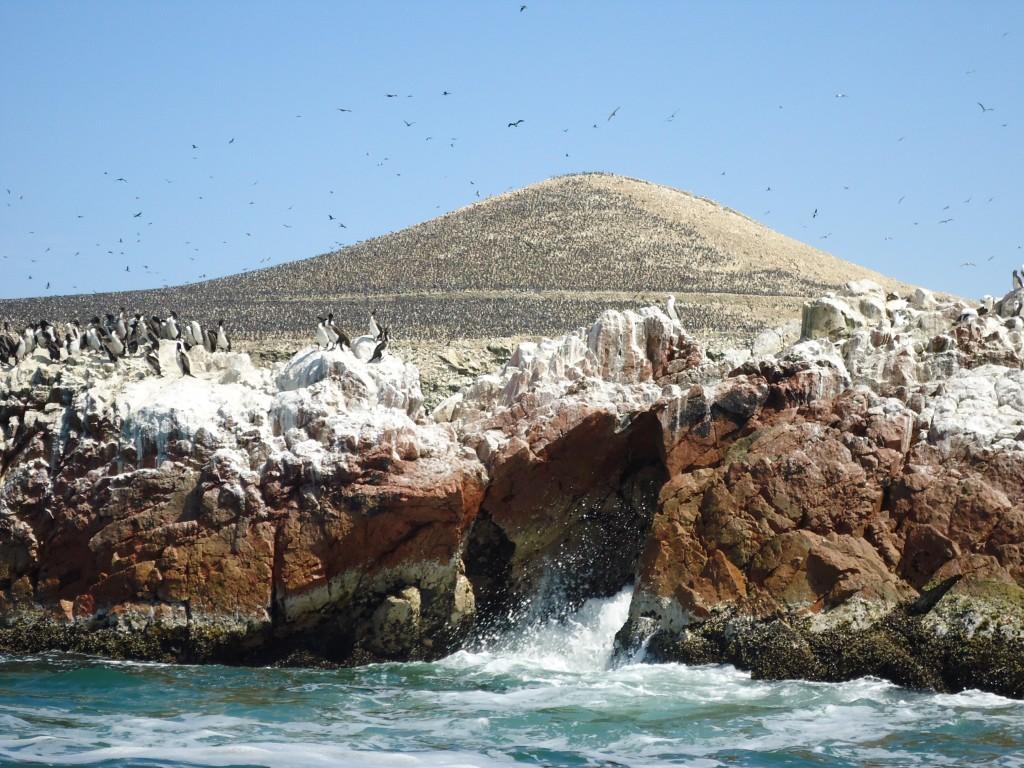 Zdjęcia: Islas Ballestas, Ica, Islas Ballestas, PERU