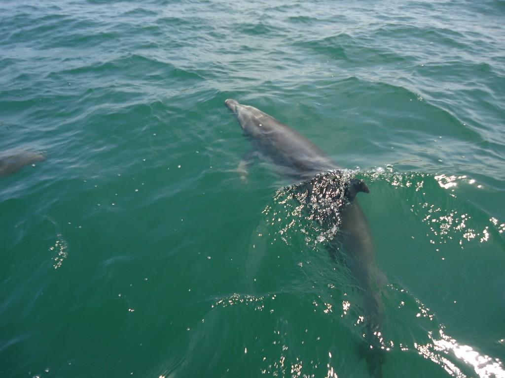 Zdjęcia: Paracas, Ica, Delfin, PERU
