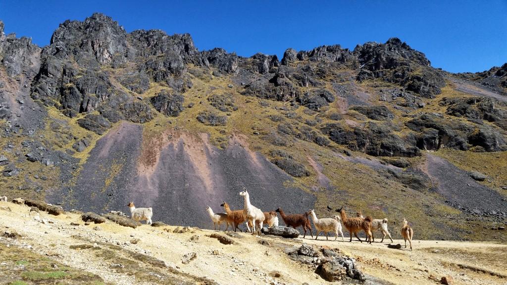Zdjęcia: Na szlaku, Cusco, Peruwiańskie Andy, PERU