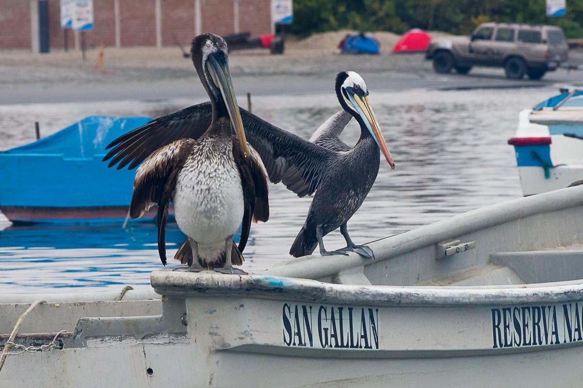 Zdjęcia: Port, Paracas, A może coś wypadnie turystom za burtę...?, PERU