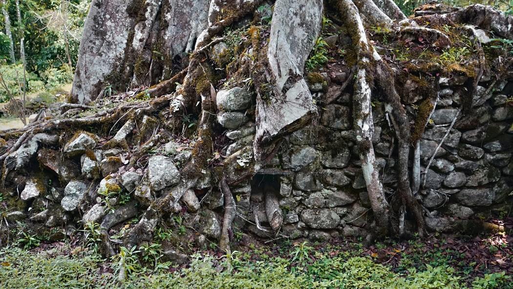 Zdjęcia: Vilcabamba, Vilcabamba, Olbrzymie korzenie oplatające ściany pałacu w Wielkiej Vilcabambie, , PERU
