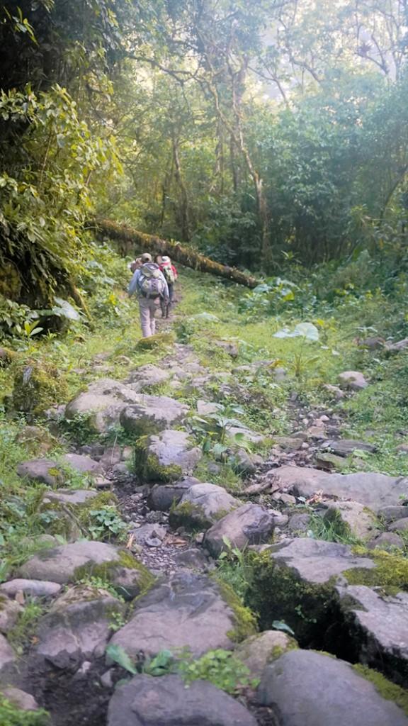 Zdjęcia: Vilcabamba, Vilcabamba, Z błotnistej ścieżki wystawały kamienne kocie głowy pozostałości inkaskiej drogi, PERU