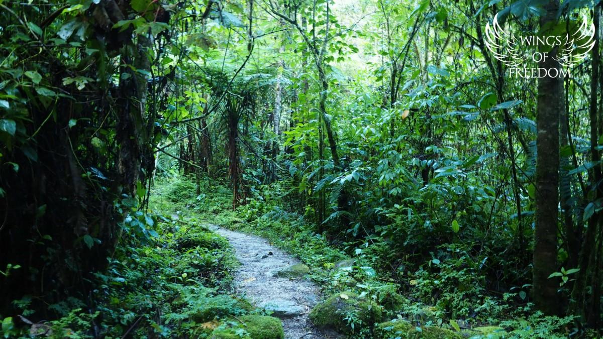 Zdjęcia: Machu Picchu, Andy, Path to the Jungle, PERU