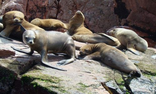 Zdjecie PERU / peru / Wyspy Ballestas / odpoczynek
