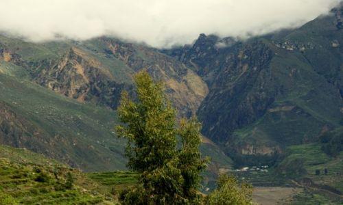 Zdjęcie PERU / Kanion  Kolca / Kanion  Kolca / Samotne
