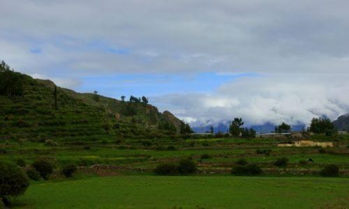 Zdjęcie PERU / Kanion  Kolca / Kanion  Kolca / Pole