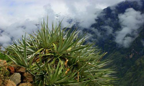 Zdjęcie PERU / Kanion  Kolca / Kanion  Kolca / Roślinka