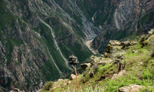 Zdjecie PERU / Kanion Kolca / Kanion Kolca / Kanion