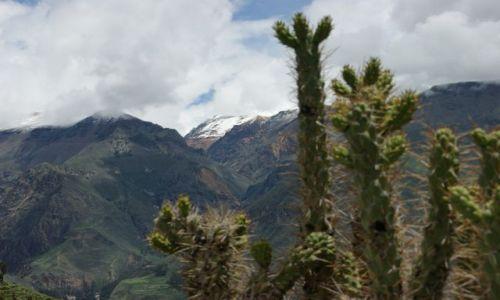 Zdjęcie PERU / Kanion Kolca / Kanion Kolca / Nad  kanionem