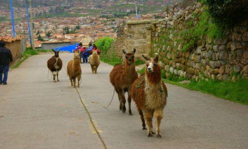 Zdjęcie PERU / Cuzco / Cuzco / Do  domu
