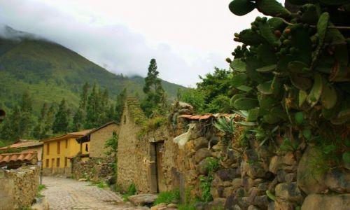 Zdjęcie PERU / Ollantayambo / Ollantayambo / Kaktusy