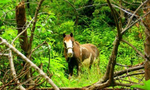 Zdjęcie PERU / Ollantayambo / Ollantayambo / Koń  w  dżungli