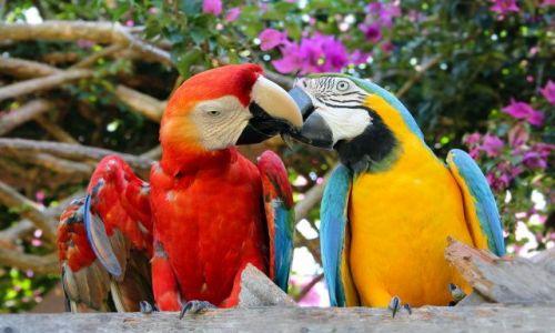Zdjęcie PERU / Puerto Maldonado / Corto Amazonas / całuski