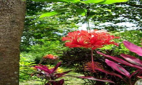 PERU / central selva / ogrod botaniczny