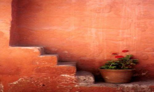 Zdjęcie PERU / arequipa / monasterio de santa catalina / flower-power