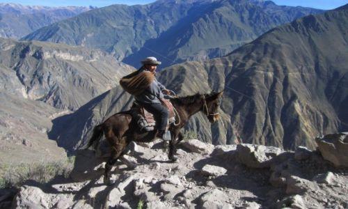Zdjecie PERU / okolice Arequipy / kanion Colca / Kobieta na mule