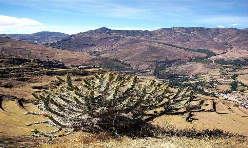 Zdjecie PERU / Andy /   / Przetrwać w Andach