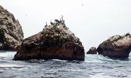 Zdjęcie PERU / Pacyfik / Wyspy Balestas / Peruwiańskie Galapagos