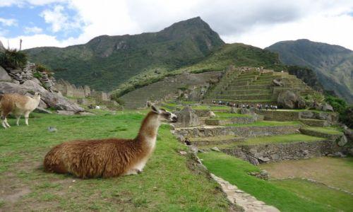 Zdjecie PERU / Cuzco / Machu Piccchu / Lamy