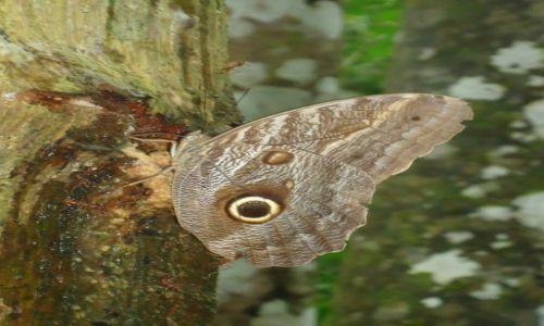 Zdjęcie PERU / Madre de Dios / okolice Salvacion / Motylek (2)