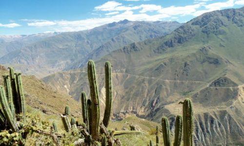 Zdjecie PERU / - / Colca Canyon / Colca