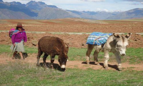 Zdjęcie PERU / Cuzco / Moray / Pani z osiołkami