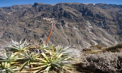 Zdjecie PERU / Arequipa / Kanion Colca / Krajobraz