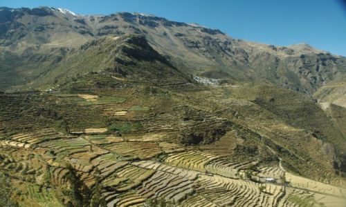 PERU / Arequipa / Puyca / Puyca