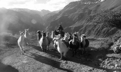 PERU / Arequipa / Pomiędzy wioskami / Znów w drodze (zdjęcie do artykułu)