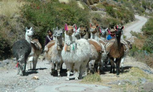 PERU / Arequipa / Suni / Suni (zdjęcie do artykułu)