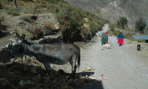 PERU / Arequipa / Suni / Wioska Suni. Paks zajada się Chalą (zdjęcie do artykułu)