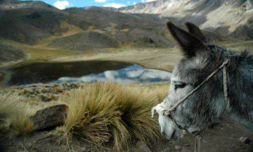 PERU / Arequipa / Peruwiańskie Andy / Paks w peruwiańskich Andach