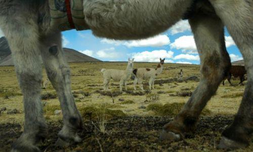 Zdjęcie PERU / Arequipa / Peruwiańskie Andy / Peruwiańskie Andy (zdjęcie do artykułu)