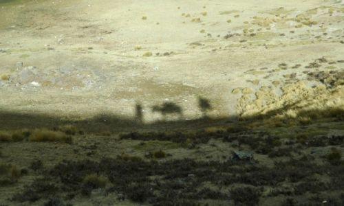 PERU / Arequipa / Peruwiańskie Andy / Ja Osioł i On w Andach (zdj.do artyukułu)