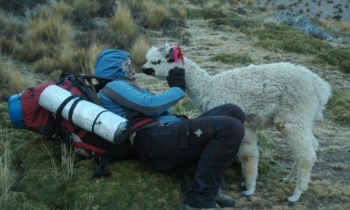 PERU / Arequipa / Peruwiańskie Andy / Mała zagubiona Alpaczka i ja(zdjęcie do art)
