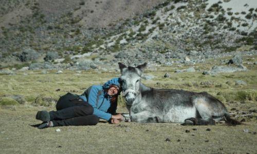 PERU / Arequipa / Peruwiańskie Andy / Nasz osiołek Paks (zdjęcie do artykułu)