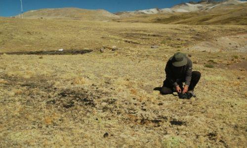 Zdjecie PERU / Arequipa / Peruwiańskie Andy / Zbieracz kup alpak ;) (wyjaśnienie w artykule Ośla wędrówka)