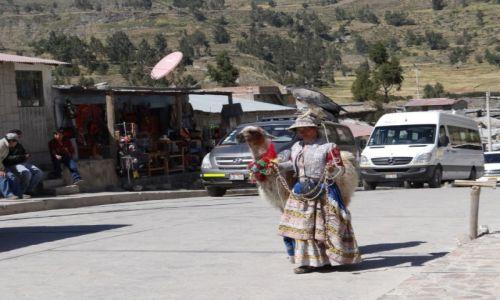 Zdjęcie PERU / okolice Chivay / ... / Moje zwierzęta-konkurs