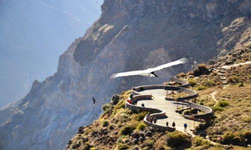 Zdjęcie PERU / Kraina kanionów / Kanion Colca / Kondory