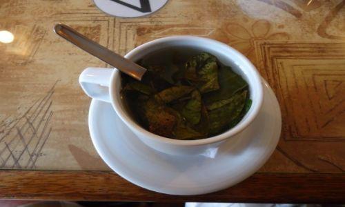 Zdjęcie PERU / Ancash / Huaraz / Herbatka, oczywiście z koki