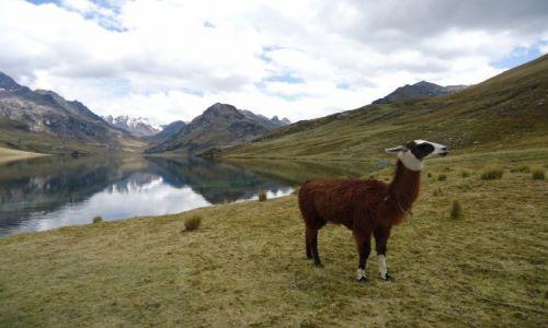 Zdjęcie PERU / Ancash / Park Narodowy Huascaran / Laguna Querococha (3)