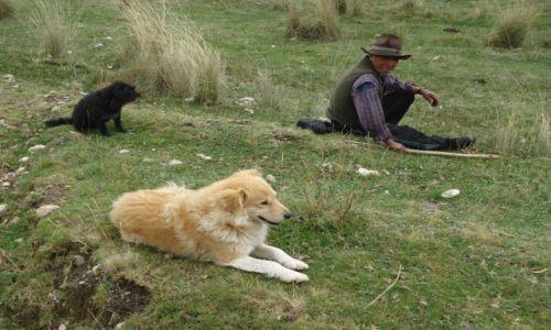 Zdjecie PERU / Ancash / okolice Huaraz / Na hali ...