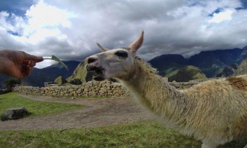 PERU / Cusco  / Machu Picchu / Wizyta w Machu Picchu