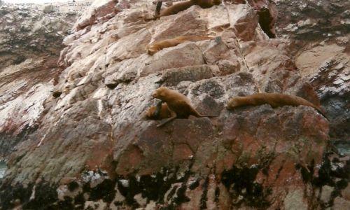 Zdjęcie PERU / Płd. Peru / Isla de las Ballestas / Galapagos dla ubogich