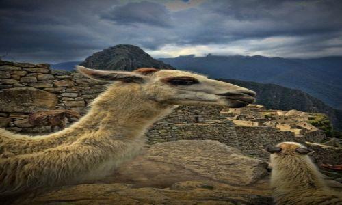 Zdjecie PERU / Cusco / Machu Picchu / Wizyta w Machu Picchu